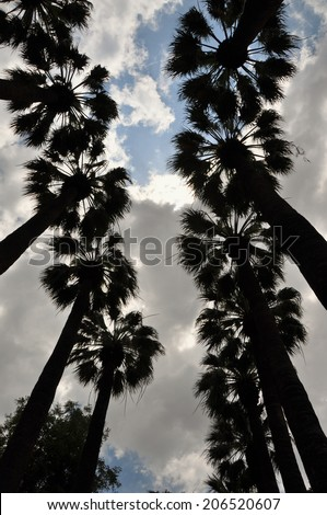 Palm trees silhouette and cloudy sky. Nature abstract. - stock photo