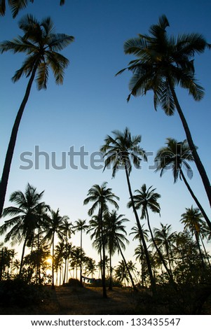 Palm trees silhouette at the sunset, India - stock photo