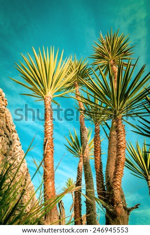 palm trees silhouette on sunset tropical beach. Tropical sunset - stock photo