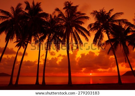 Palm trees silhouette on tropical beach at warm sunset light - stock photo