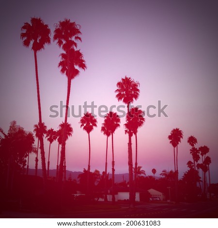 palm trees silhouettes - stock photo