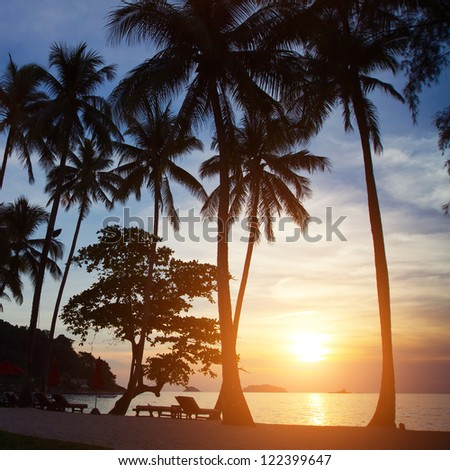 palm trees silhouettes at sunset - stock photo
