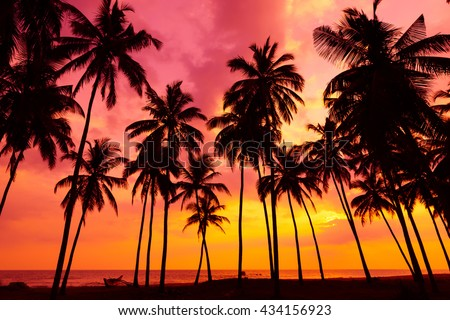Palm trees silhouettes on tropical beach at vivid sunset time - stock photo