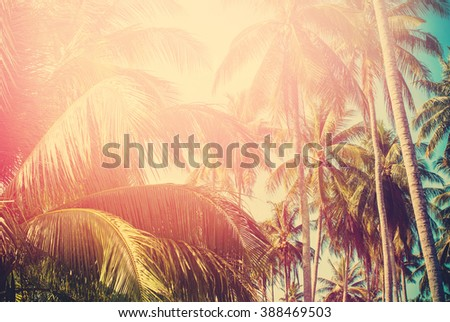 Palm Trees Sun Light Hot Equator Nature Landscape Tropical Background Holiday Travel Design Toned Effect - stock photo