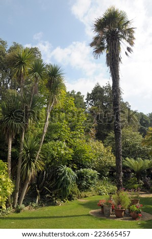 Palm trees tree in Abbotsbury gardens, Dorset - stock photo