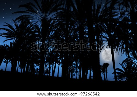 Palm Trees under the moonlight in tropics - stock photo