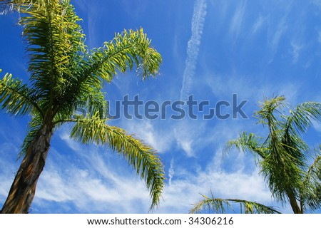 Palm trees with blue sky useful as a a background - stock photo
