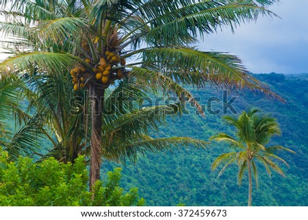 Palm trees with exotic tropical background in Hawaii - stock photo