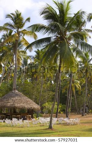 Palm wood - stock photo