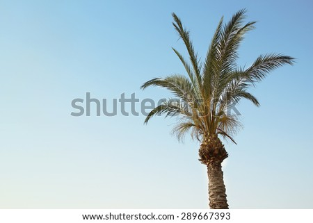 palms against the clouds of heaven - stock photo