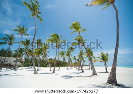 Palms at Juanillo beach in Dominican republic - stock photo
