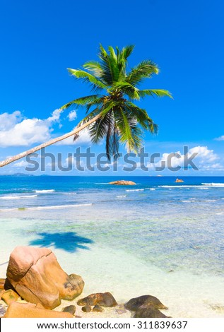 Palms Heaven Coconut  - stock photo