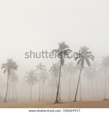 Palms in morning fog in Arambol, Goa, India - stock photo