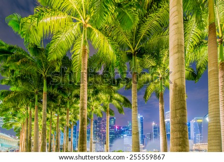 Palms in Singapore during night time - stock photo