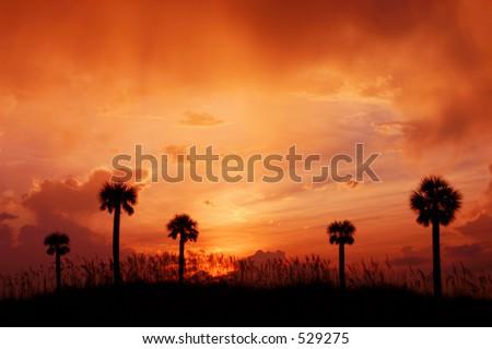 Palms in Sunset Light. Madeira Beach Fl - stock photo