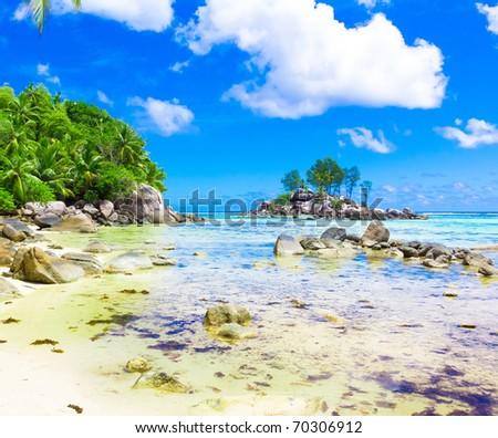 Palms Landscape Jungle - stock photo
