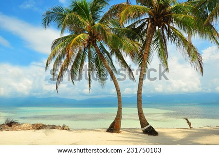 Palms on the beach in the Caribbean sea - stock photo