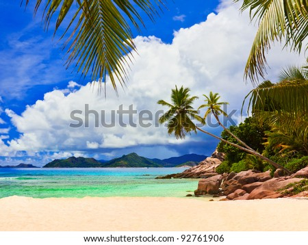Palms on tropical beach - nature background - stock photo