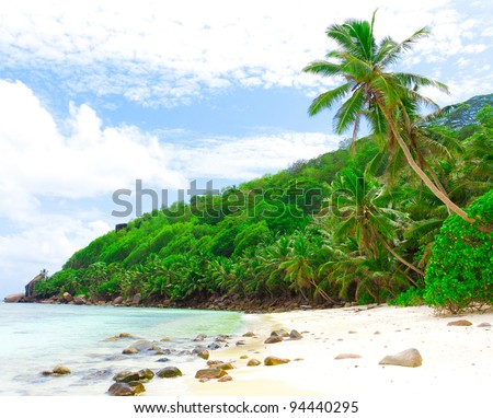 Palms Shore Tranquility - stock photo