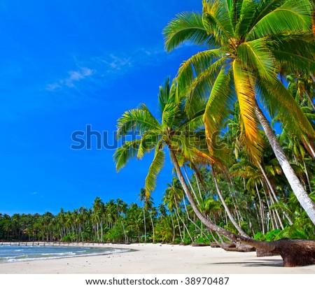 Palms trees on the beach - stock photo