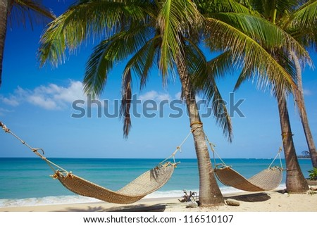 Palms with hammock on the sea cost in resort - stock photo