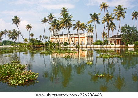 Palms with reflections in Kerala, India,  - stock photo