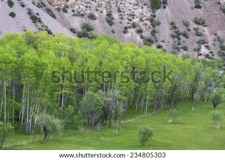 Pamir birch on the lake Iskander, Tajikistan - stock photo