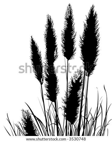 Pampas Grass Silhouette - stock photo