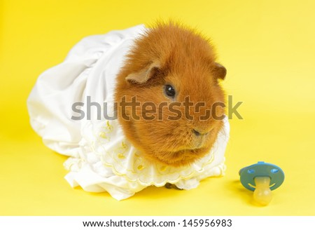 pamper pig - stock photo