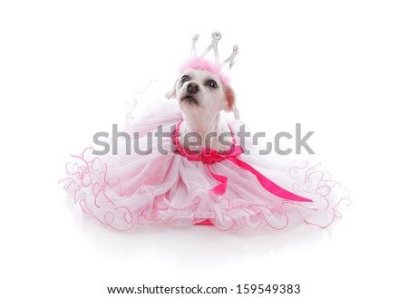 Pampered pet dog wearing a princess tiara and pretty soft pink frilled tulle dress with pink ribbon.  Looking up with anticipation.  White background - stock photo