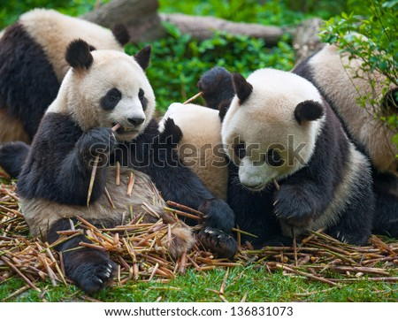 biology 101 the pandas thumb reflection Biology news and videos from research institutes around the world updated daily.