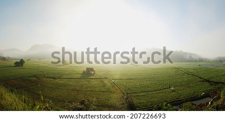 Panorama Bean Fields - stock photo