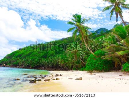 Panorama Dream Jungle  - stock photo