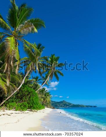 Panorama Jungle Shore - stock photo