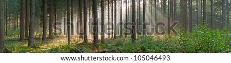Panorama landscape of forest in the mist with sun rays. Magical beauty. Drentsche Aa. Drenthe. The Netherlands. - stock photo