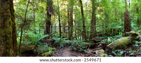 Panorama of a path through an Australian temperate rainforest, with lush treeferns, moss-covered logs, and myrtle beech trees. - stock photo