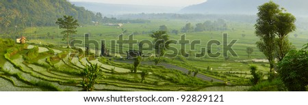 Panorama of a valley with green rice terraces and trees - stock photo
