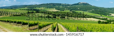 Panorama of beautiful wine fields in Italy - stock photo