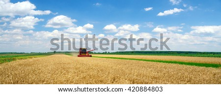 Panorama of harvester combine harvesting wheat on sunny summer day. - stock photo