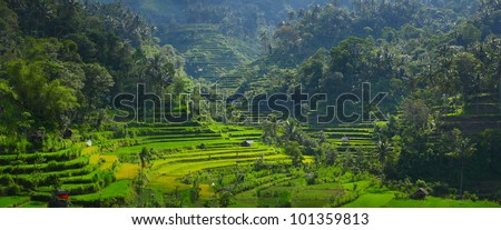 Panorama of rice fields in a mountains - stock photo