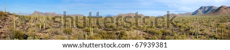 Panorama of Saguaro National Park from Signal Hill Trail. - stock photo