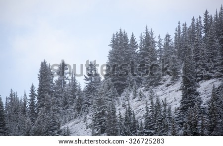 Panorama of snow covered trees at Icefield Parkway, Jasper / Banff National Park, Alberta Canada - stock photo