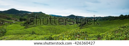 Panorama of Tea Plantation, Cameron Highland Malaysia - stock photo