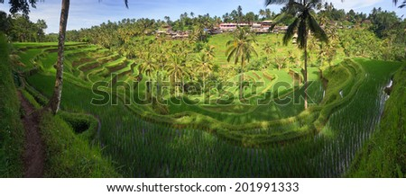 Panorama of Terrace rice fields in Tegallalang, Ubud on Bali, Indonesia. - stock photo