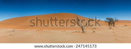 Panorama of the Hidden Vlei with dead trees, Namib Desert, Namibia - stock photo
