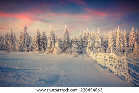 Panorama of the winter sunrise in the forest - stock photo