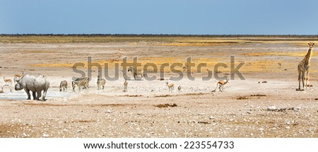 Panorama scene of Giraffe, Oryx, Zebra, Black Rhino & Springbok in Etosha National Park - stock photo
