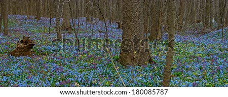 Panorama spring forest - stock photo