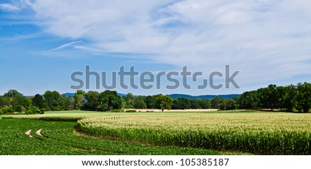 Panoramic image of curved rows of corn and soybeans growing in summer under cloudy blue sky - stock photo