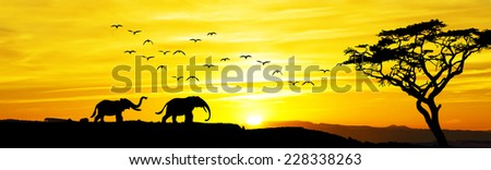Panoramic of African wildlife - stock photo